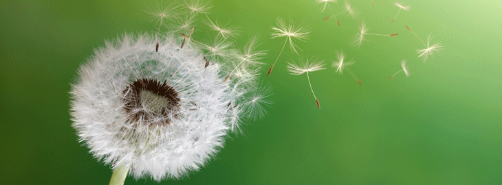 Banner: Dandelion blowing in the wind