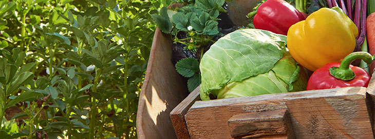 Image: Sustainable foods vegetables in a wooden crate