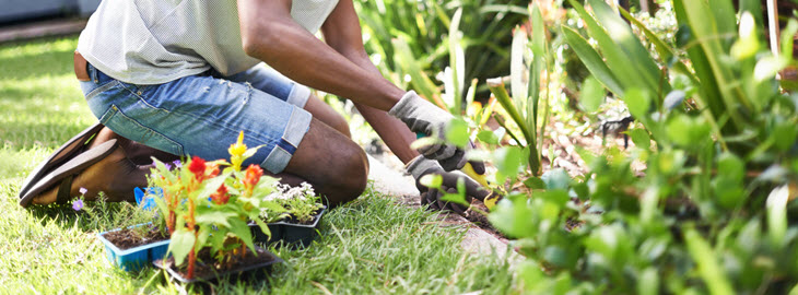 Banner: Health blog - Gardening isn't an extreme sport – but it can cause back pain, hand and knee injuries